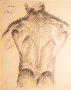 Image of Anatomical sketch of male back