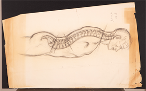 Image of Anatomical sketch